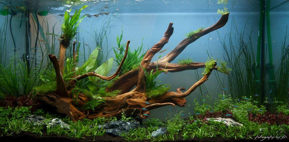 Aquarium de maison