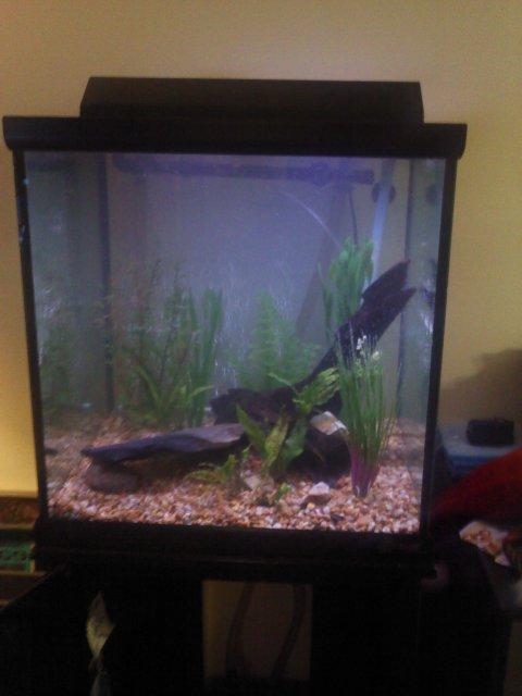 Aquarium cube occasion
