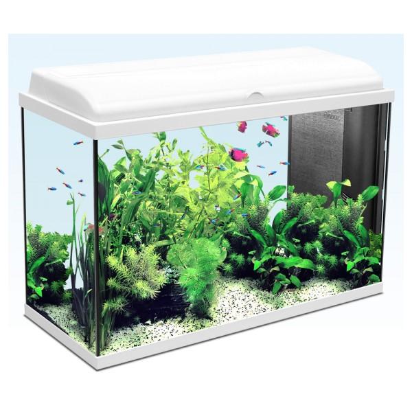 Promotion aquarium animalis