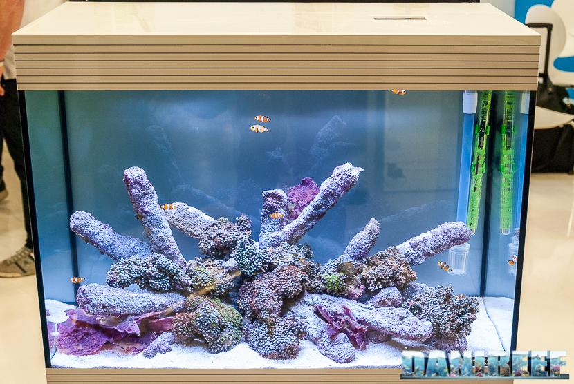 Aquarium occasion 06