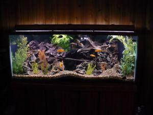 Petit aquarium a donner