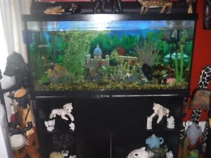 Aquarium 30 litres prix