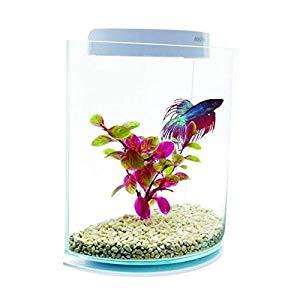 Petit aquarium original