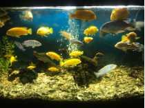 Aquarium 6 pied