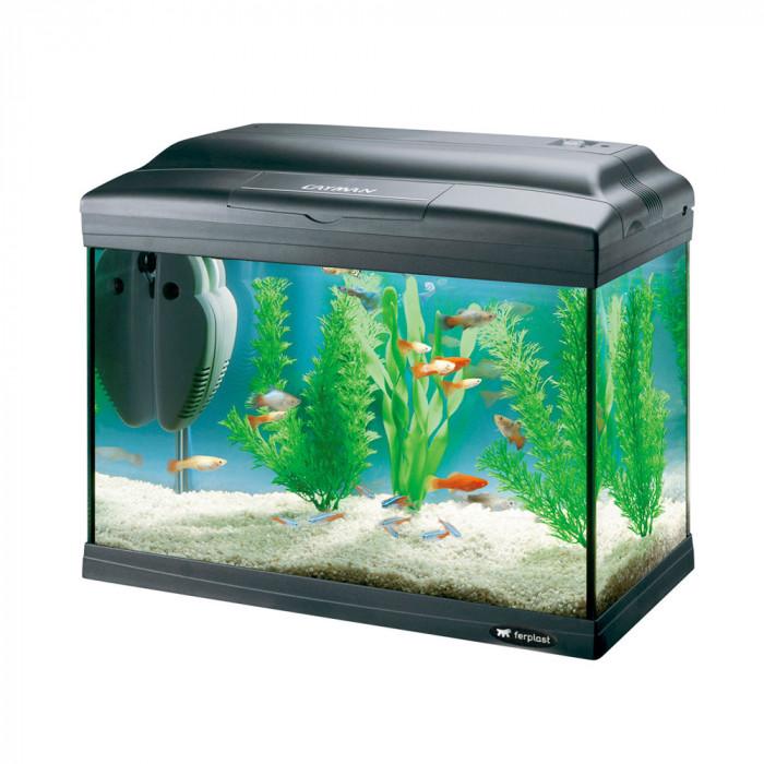 Petit aquarium avec pompe