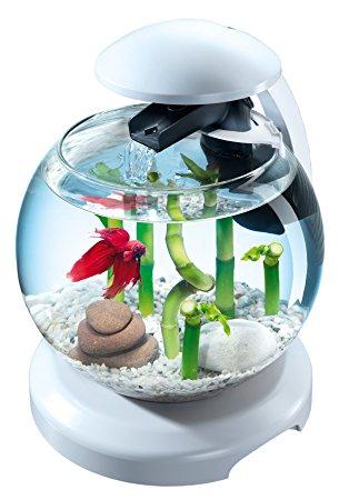 Prix petit aquarium poisson rouge
