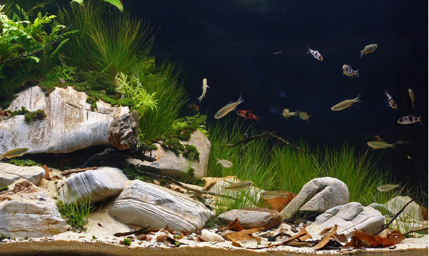 Recherche un aquarium