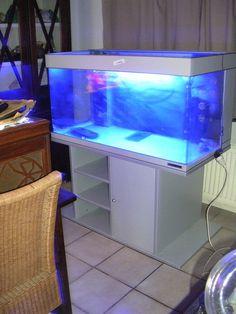 Aquarium murale a vendre