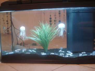 Poisson aquarium à vendre