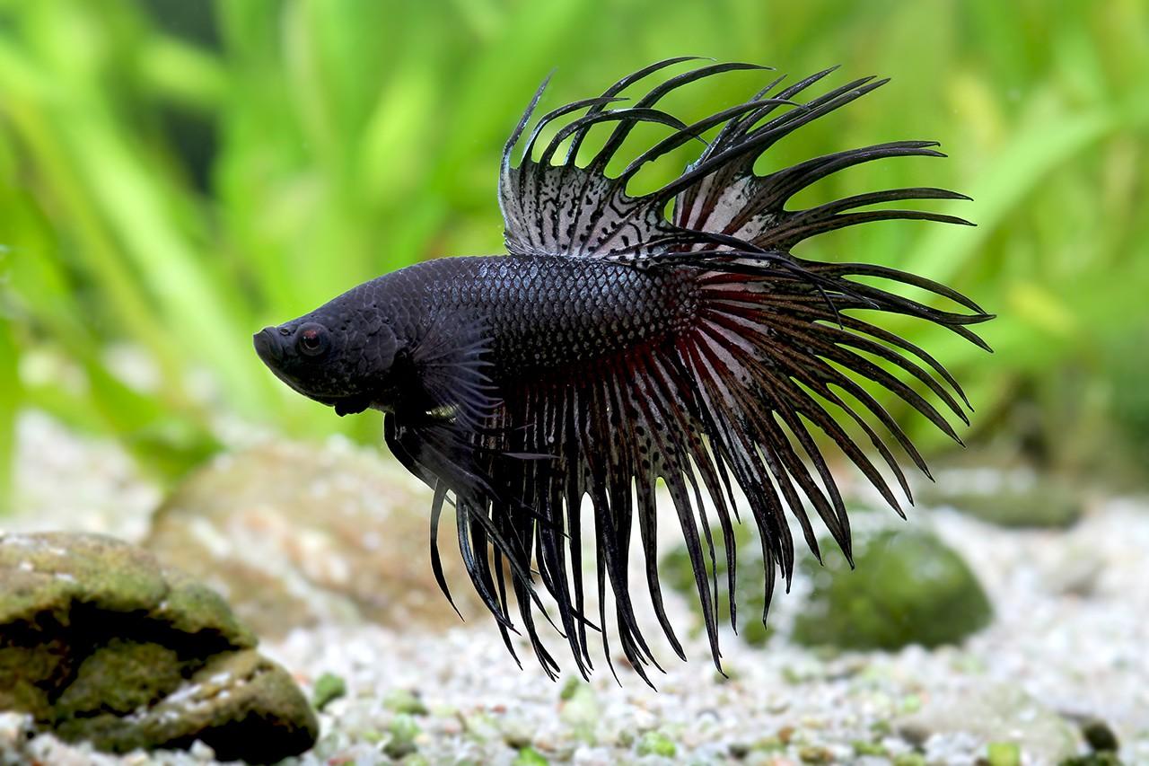Aquarium pour poisson pas cher