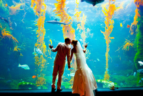 Aquarium occasion bordeaux