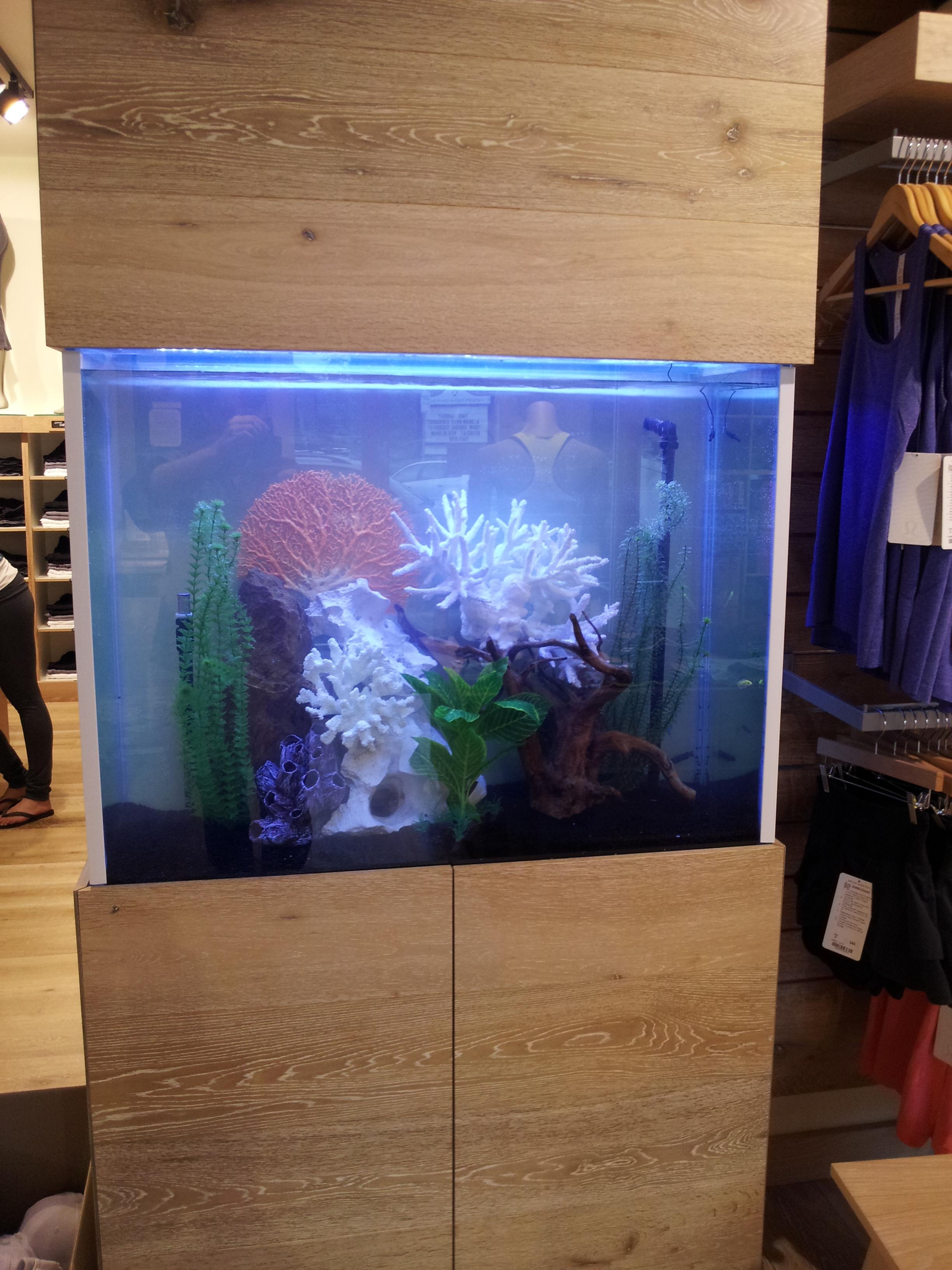 Aquarium occasion toulouse