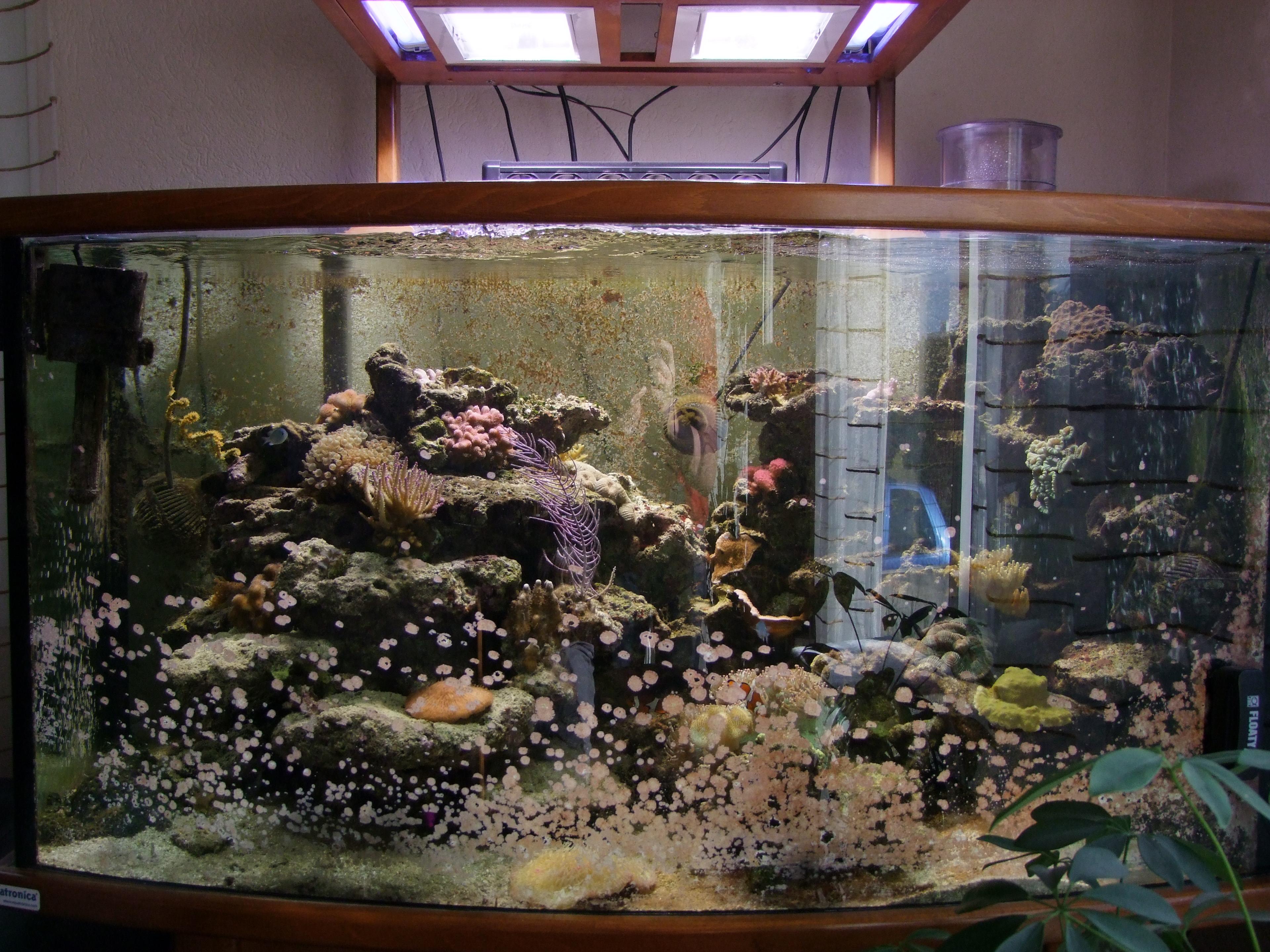 Aquarium en forme de maison