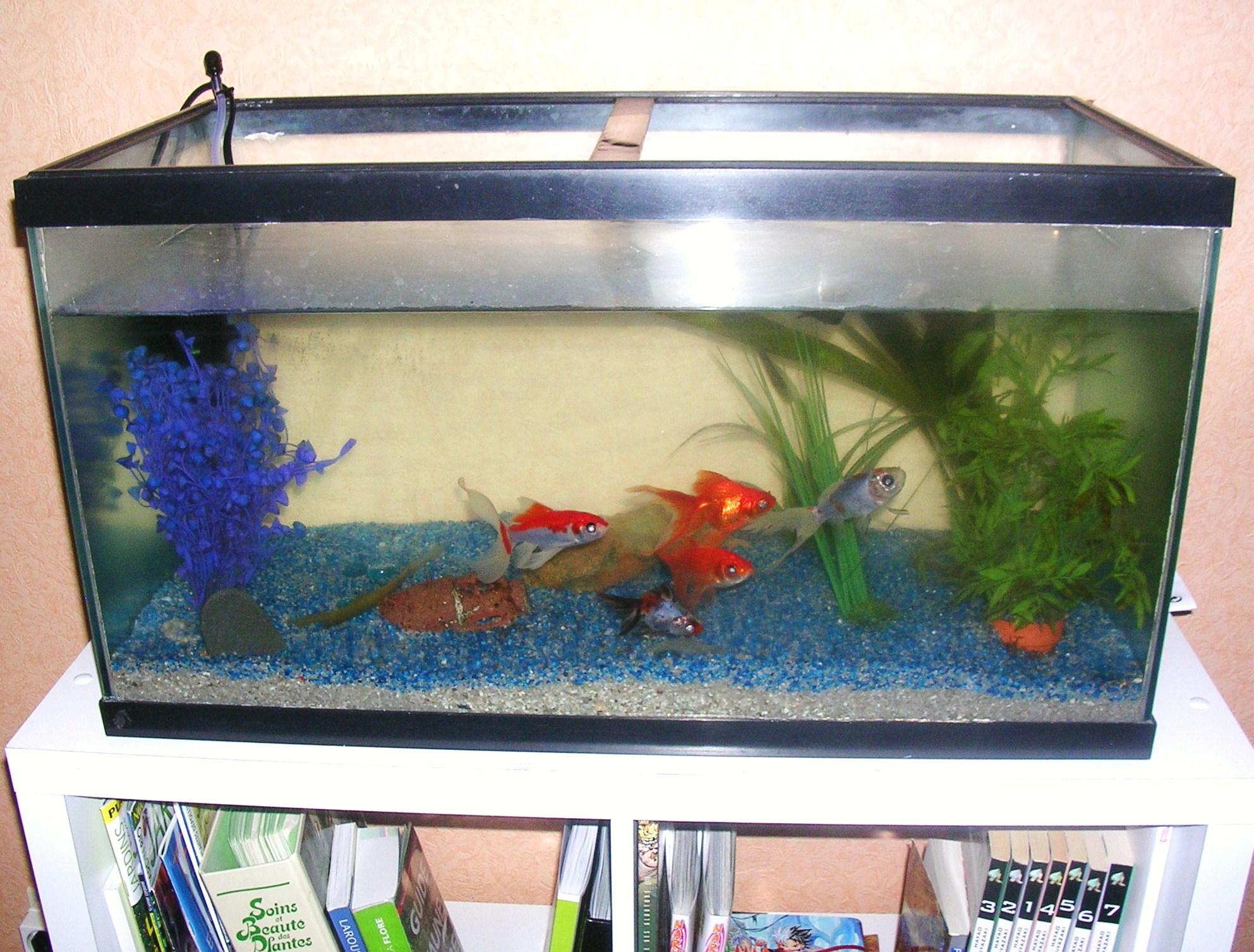 Bocal poisson rouge acheter