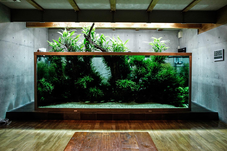 Les aquarium de maison