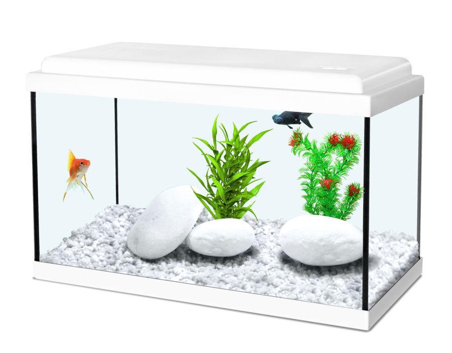 Aquarium rectangulaire poisson rouge