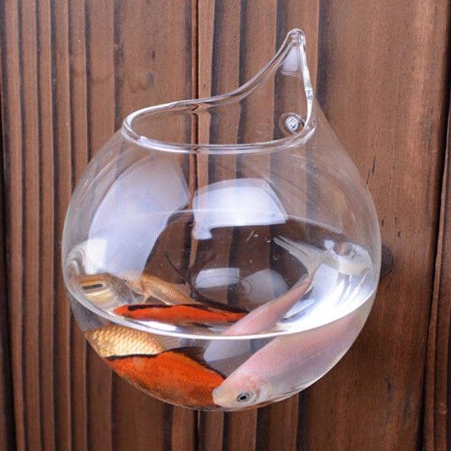 Aquarium en verre pas cher