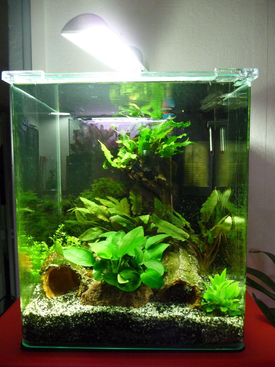 Aquarium gamm vert