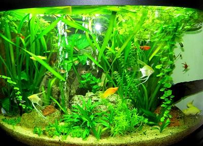 Vente d aquarium