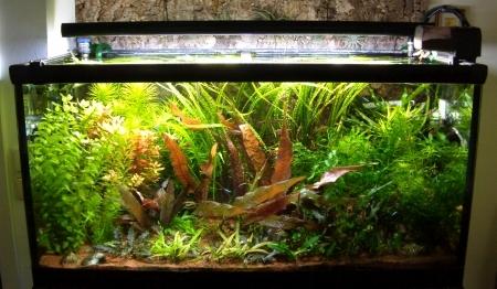Aquarium 250 l occasion