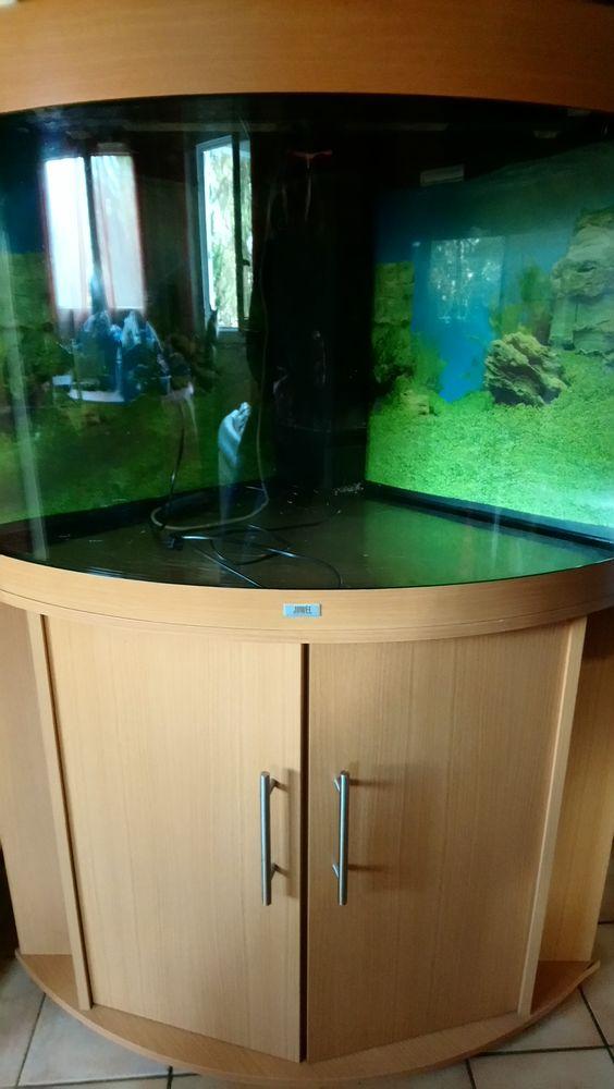 Aquarium occasion à vendre