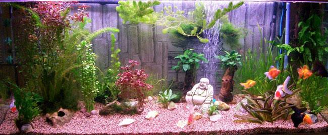 Aquarium tout équipé pour poisson rouge