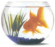 Acheter bocal poisson