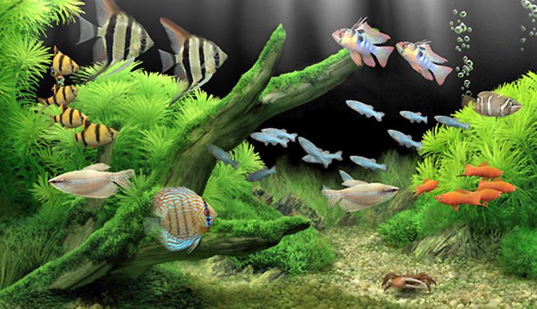 Vente poisson aquarium