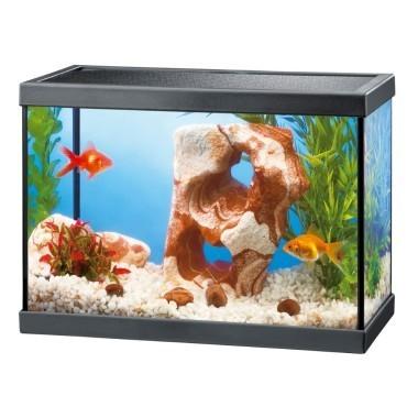 Prix d un aquarium a jardiland