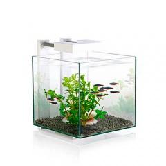 Achat petit aquarium