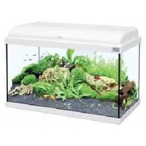 Vente aquarium 800 litres