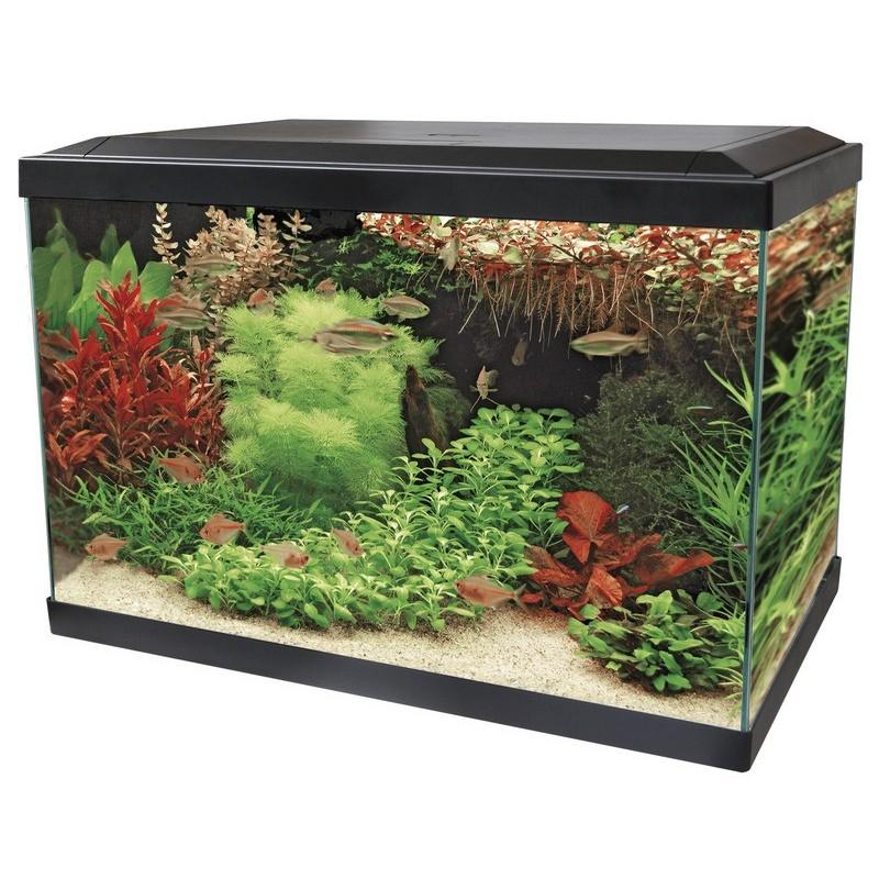 Petit aquarium avec filtre