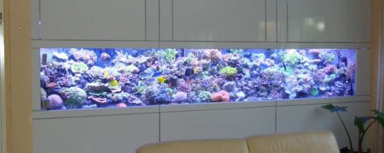 Aquarium de mer a vendre