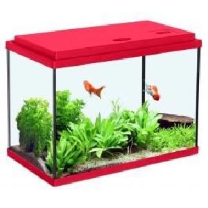 Poisson aquarium a vendre
