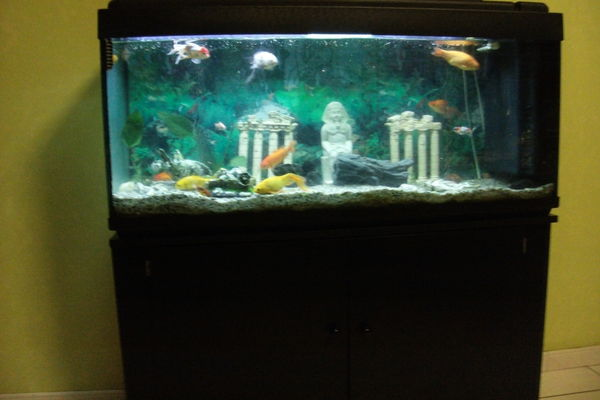 Kit aquarium complet