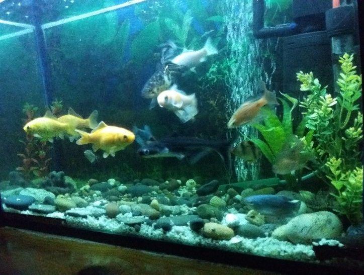 Aquarium à vendre belgique