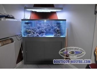 Aquarium angle occasion