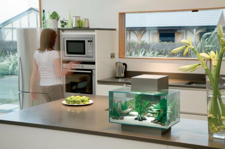 Petit aquarium design