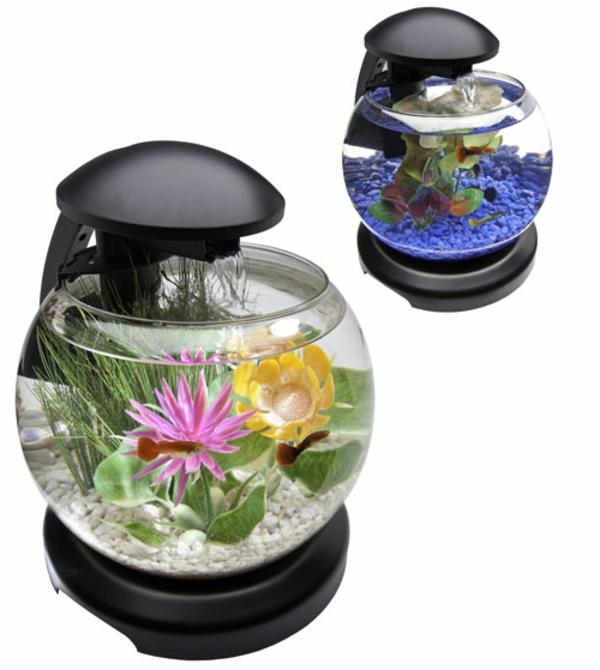 Petit aquarium complet pas cher
