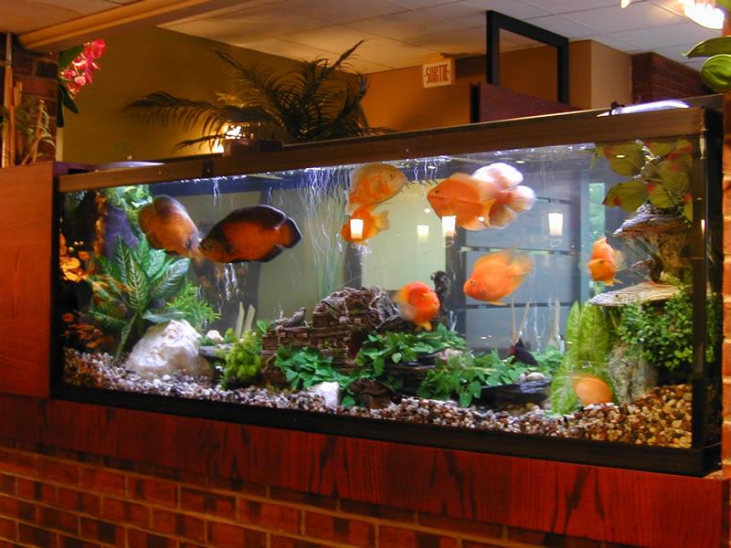 Aquarium 60 l occasion