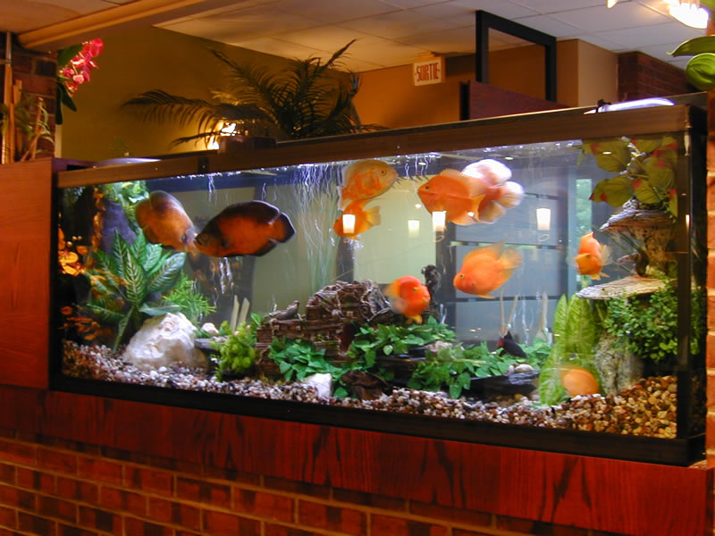 Aquarium vente occasion