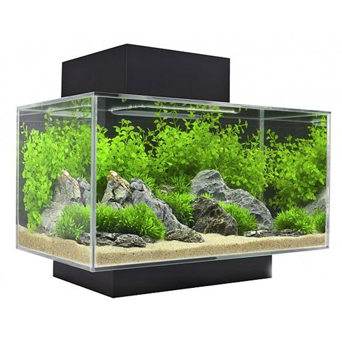 Aquarium gam vert