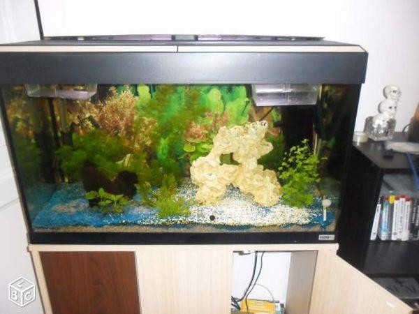 Aquarium 350 litres complet meuble et poissons