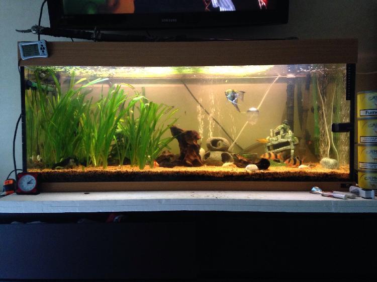 Vendre aquarium occasion