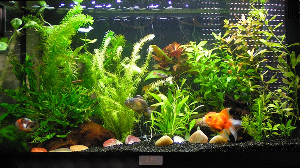 Poisson pour aquarium pas cher