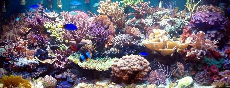 Aquarium eau chaude prix