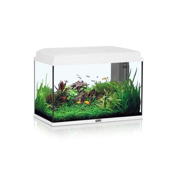 Aquarium vente