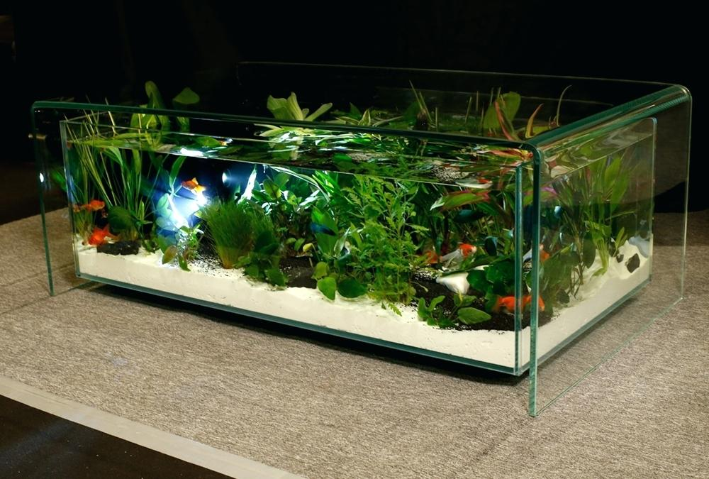 Ou trouver aquarium pas cher