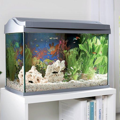Petit aquarium à vendre
