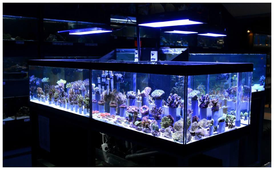 Vente aquariophilie discount